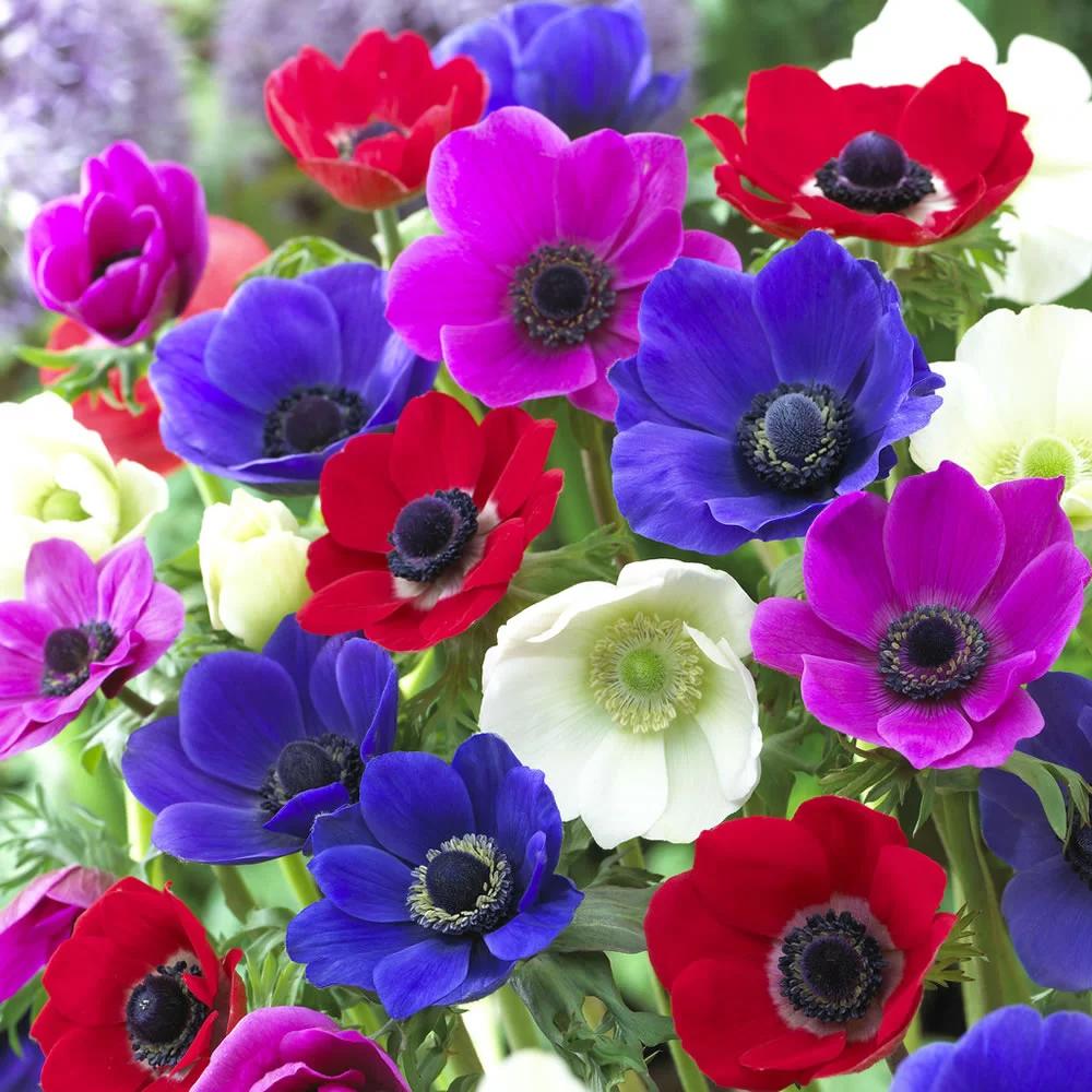 50% Off Marked Price Of Flower Bulbs in Wilko (Cwmbarn)