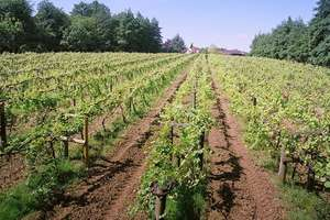 Tour and Tasting for Two at Chiltern Valley Winery and Brewery £5 @ Buyagift