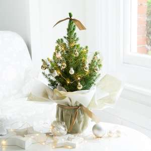 20% off Decorated Potted Christmas Trees with Voucher Code @ Blossoming Gifts