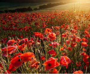 Stagecoach Free bus and coach travel (Likely National) for Armed Forces - Remembrance Sunday (10th November)