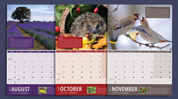 Free Autumnwatch Calendar from Open University