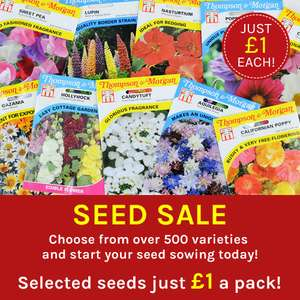 £1 seed sale at Thompson and Morgan from £1 + £1.95 P&P
