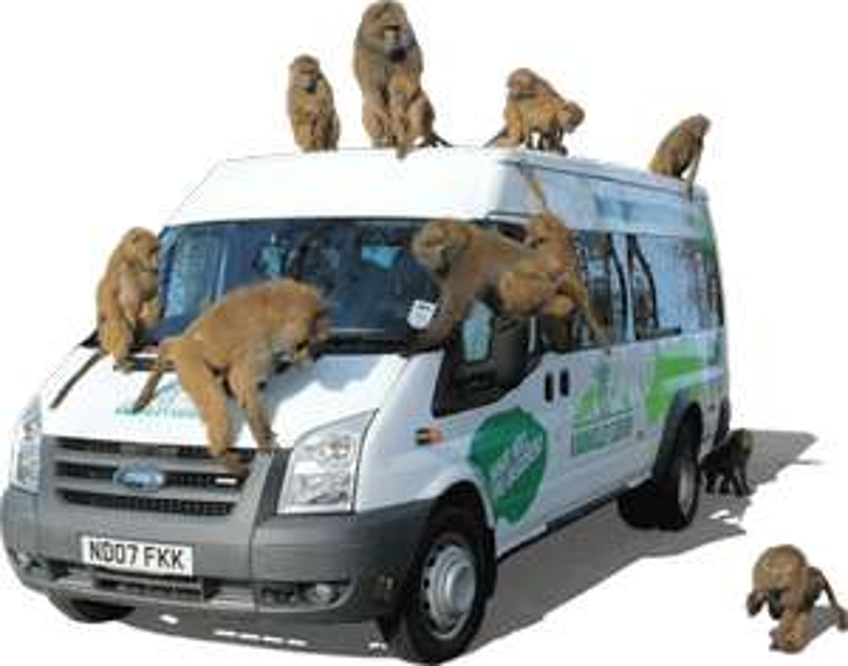 Knowsley Safari Park £20 (upto 7 people per Car) Wed - Sun until Feb 2020