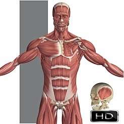 Visual Anatomy 1 (full version) for iOS devices FREE