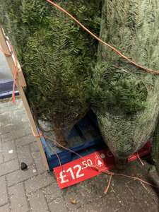 B&M Nordman Fir Real Christmas Tree 150cm 5ft In store £12.50 (Found at Lincoln store)