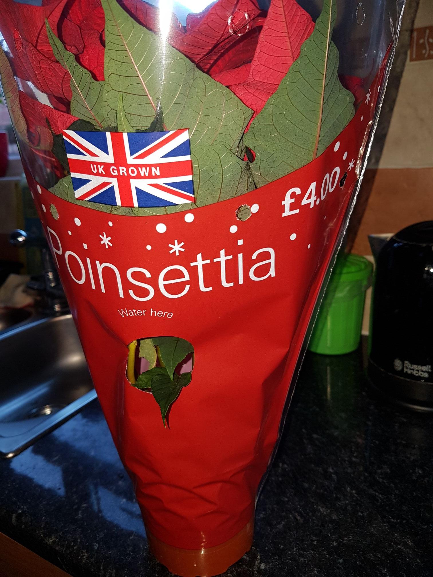 Poinsettias £1 at B&Q Leeds
