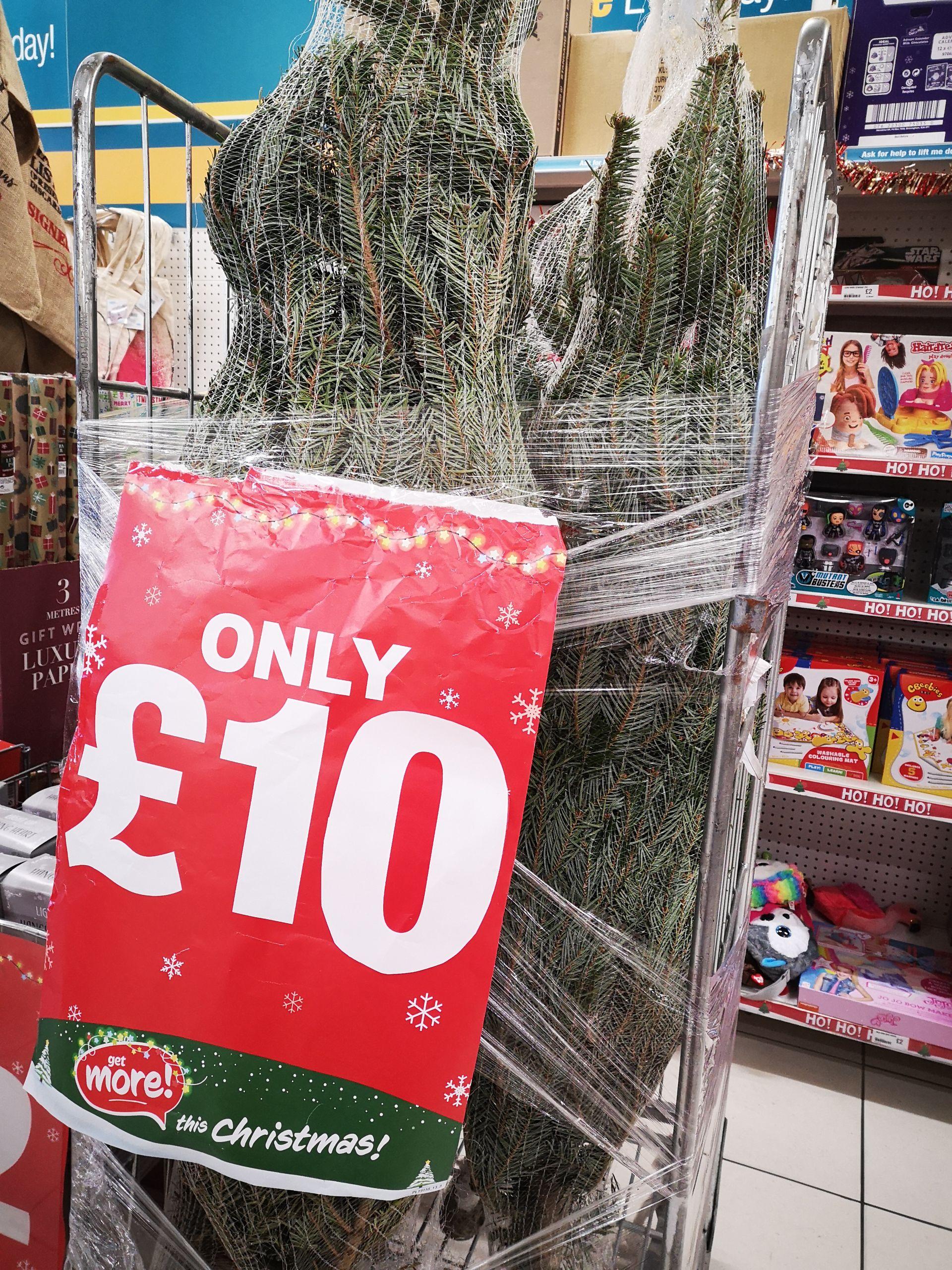 Real 6ft Christmas trees @ poundland (Macclesfield) - £10