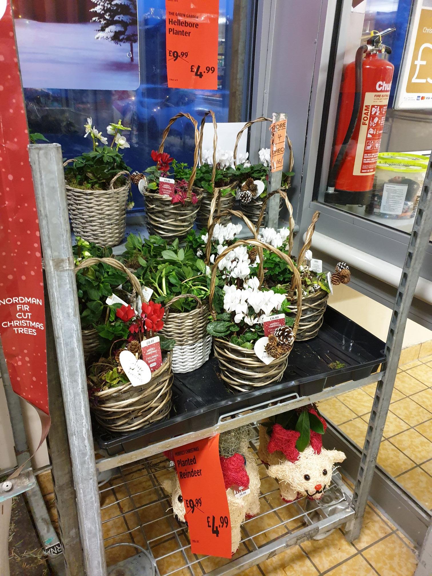 Aldi christmas planters reduced to £4.99