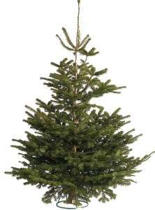Real Christmas trees £2.50 @ IKEA (Gateshead)