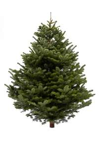 FREE Christmas Trees (Large/Small) at BP Garages (found Earley Reading)