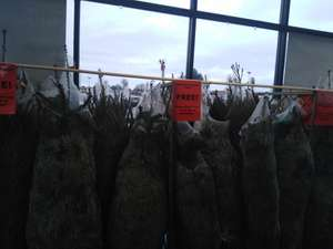 Homebase Pollokshaws in Glasgow are giving their Real Christmas trees away for free