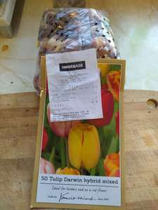 50 mix Tulips £1 @ Homebase Hanworth