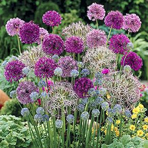 20% off Bulbs with Voucher Code @ You Garden