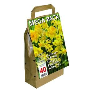 Greenbrokers Limited (Pack of 40) Big Buy Value Pack-Yellow Daffodils Narcissus now £5.99 (Prime) + £4.49 (non Prime) at Amazon