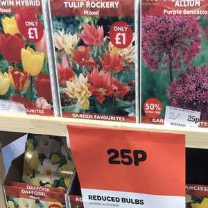 Bulbs in Spar 25p