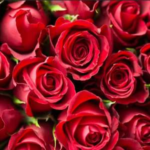 Tesco 12 red roses for Valentines for £5.00 instore
