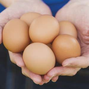 15 Chippendale free range eggs class a mixed size £1.20 @ Morrisons