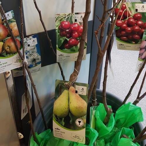 Cherry pear apple plum trees 4ft - £5 from Wilko Blackburn
