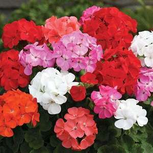 10% off Selected Bedding Plants with voucher code @ Gardening Direct