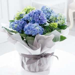 15% off All Plants with voucher code @ Blossoming Gifts
