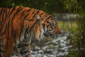 Over 150 Free Activities for kids (all ages) @ Chester Zoo