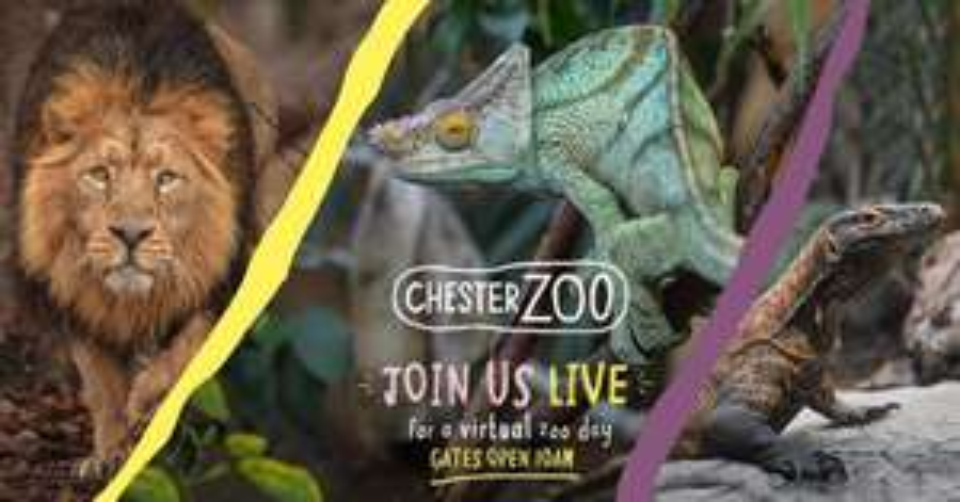 Chester Zoo - Free Virtual Tour 10th April
