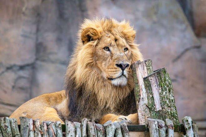 London Zoo - Free Virtual Tour