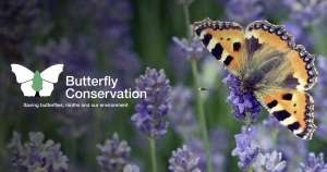 FREE 1 YEAR MEMBERSHIP TO BUTTERFLY CONSERVATION