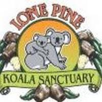 Free Live Stream of Koalas via Lone Pine Koala Sanctuary (Australia)