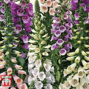 Free Summer Perennials x 36 (Postage of £5.80) with code @ Thompson & Morgan