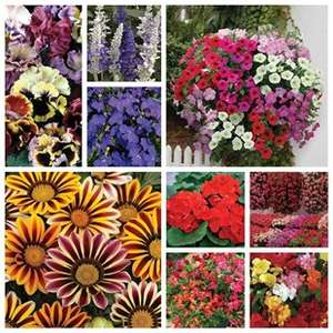 Lucky Dip summer bedding plants — four boxes of 24 large flowering plants (random selection) for £28.81 delivered @ Gardening Direct