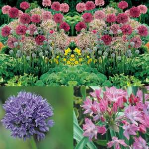 Mixed Allium Bulb Collection - 20 for £8.48 / 100 for £13.48 / 200 for £17.48 Delivered @ Groupon - Possible 7% Discount Too