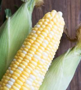 Fresh Corn on the Cob in Husks 35p at Aldi from today Letchworth Garden City