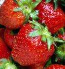10 Strawberry Plants £3.49 DELIVERD!!!!!!!!!!!! @fothergills