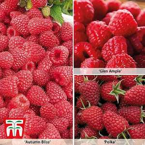 Free 6 Raspberry Canes with code - Just pay £5.80 delivery @ Thompson & Morgan