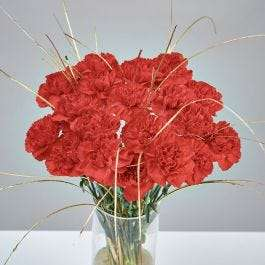 Fresh radiant Red And Gold Carnations (20 Stems) for £20.94 delivered using code @ Gardening Direct