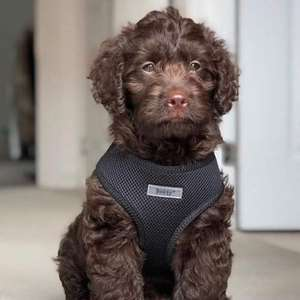 20% off all pet personalised items (e.g. small soft mesh fabric adjustable harness for £11.98 delivered using code) @ Bunty Pet Products