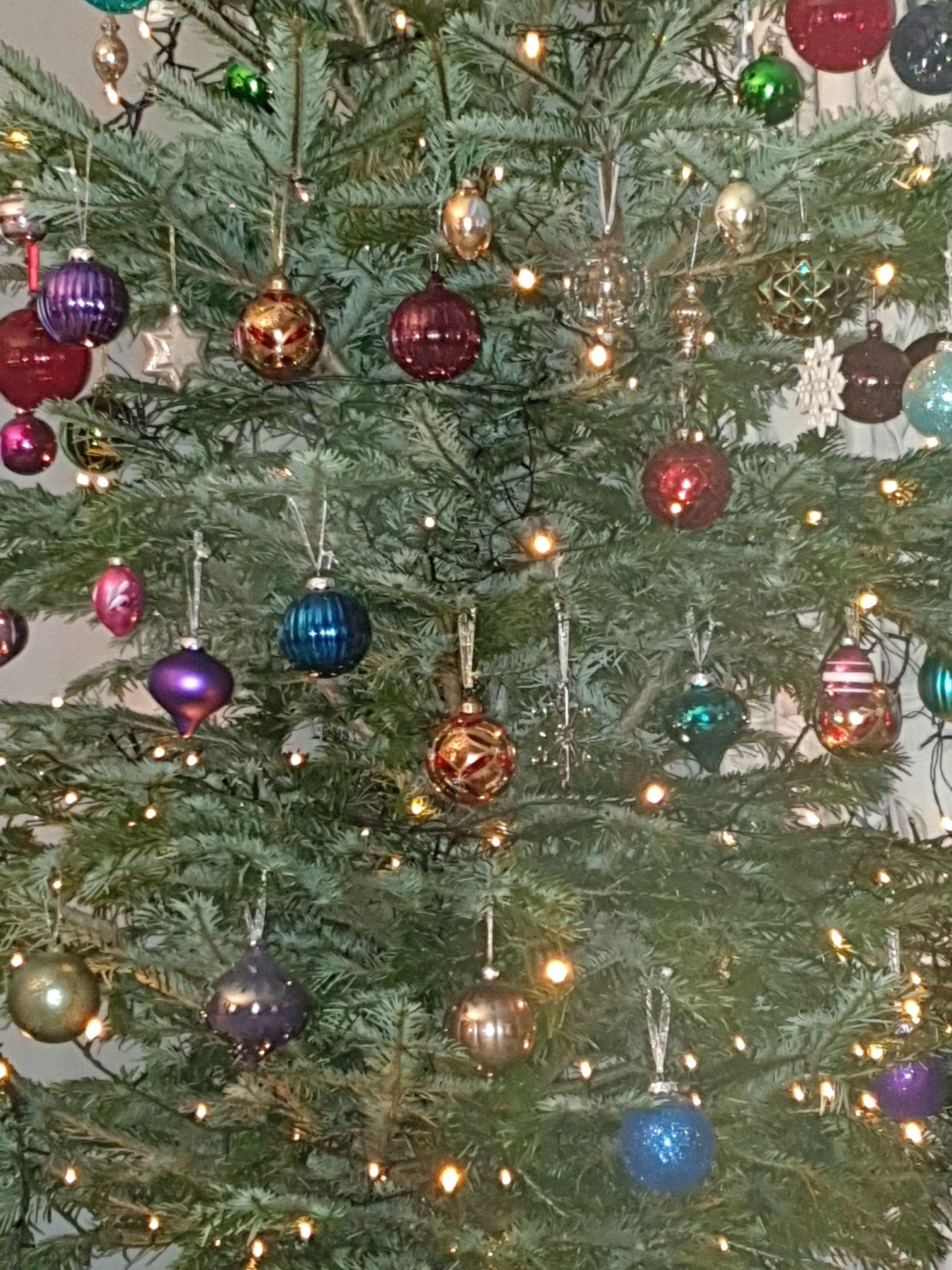 Real Christmas Trees - £3 Instore @ Homebase (Derbyshire)