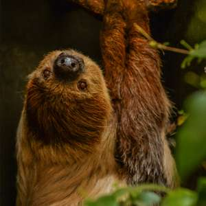 Chester Zoo - Virtual Zoo Day (22nd January) @ Chester Zoo