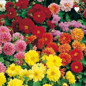 Free YouGarden spring seed mix from Vodafone Very me just pay £2.99 postage with a very me code