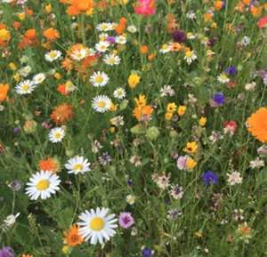 Free Wildflower Seeds just pay 99p postage @ Just Bee Honey