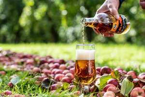 Cider Tasting for Two & a Tour of The Orchard, Cider Press and Apple Burn at Dorset Nectar £7.50 @ BuyAGift