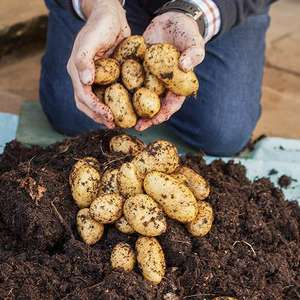Free Patio Potato Pack with code - Just Pay Postage (+£6.99) @ You Garden