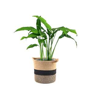 Cotton Rope Plant Basket, 7.87 inches Woven Storage Basket Trendy Plant pot - £8.99 (+£4.49 NP) - Sold by WXJ13 Online / FBA @ Amazon