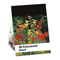 30 Mixed Crocosmia Flower Bulbs £2.50 + Free Click & Collect @ B&Q