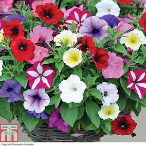 24 sensational summer flowering plants from only £1.29 a pack (+£4.99 delivery) @ Thompson & Morgan