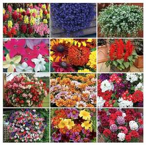 36 free* mixed summer plants - Just pay £5.80 postage (UK Mainland) @ Thompson & Morgan