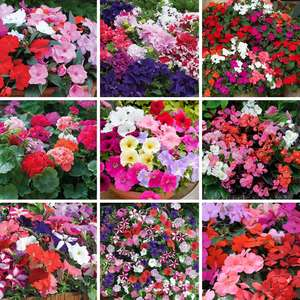 Summer Saver Collection & Lucky Dip Annual Garden Favourites 144 Plug plants for £16.97 Delivered @ Suttons seeds