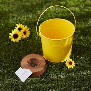 Kids grow your own strawberries, tomatoes and sunflowers - £3.50 each at Dunelm - free Click & Collect or £3.95 delivery