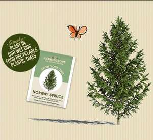 One Pack of Free Nordic Spruce Tree Seeds @ Harringtons
